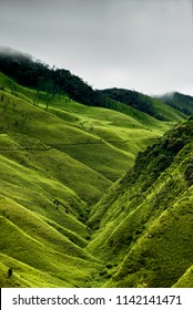 This valley acts as the gateway to the Dzukou valley.