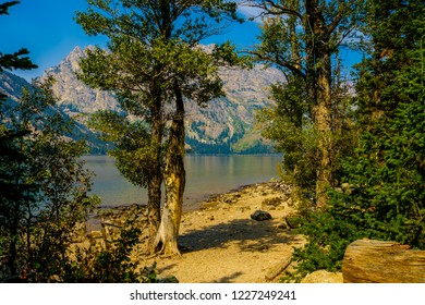 This is a view of beautiful Jenny Lake and the Tetons from the shoreline, at grand Teton National Park in Wyoming. The evergreens in the foreground give the image a more three dimensional perception.