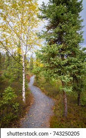 This walking path feels like you are traveling to a magical place. This spot is located near Yellowknife, Northwest territories of Canada.