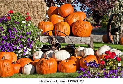 This is white and orange pumpkins in an autumn or fall still life display, with flowers, a rustic wagon wheel and bails of hay, perfect for a seasonal image.