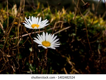 this wild flowers bloomed at 10000ft high altitude,weseen the in the way of SANDAKPHU in INDIA WEST BENGAL.