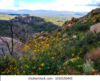 This wildflower image was captured on trail 261 in the Granite Mountain Wilderness of boulders and steep grades. This beautiful area is located west of Prescott, Arizona.
