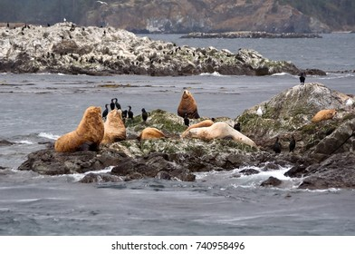 This wildlife image is several sea lions on a small rocky island.