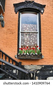 This window in Wheeling, West Virginia is adorned with a quaint window box of tulip flowers.  This is located in the historic City Centre area.