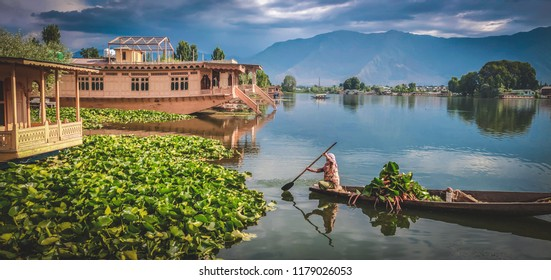 This woman was picking up lilies in the morning at Nigeen lake, Srinagar. And this was the view from our Houseboat.