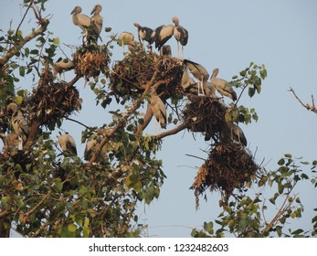 This is a wonderful scene.The tree is home to a lot of birds,which are not visible everywhere.