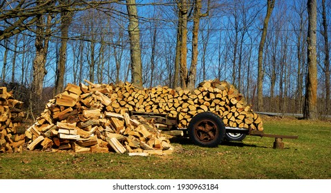 This wood comes from a tree that fell due to a strong wind. It was a beautiful tree. Ulverton, Quebec, Canada, April 20, 2020.