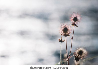 Thistle by the Zminje lake in Durmitor National Park, Montenegro.
