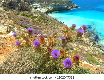 Thistle flowers with the background of the splendid sea in the cove of the island of the Mediterranean Sea