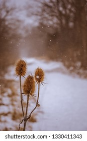 Thistle plant along the trail on a snowy day in the woods