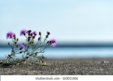 A thistle plant grows through the concrete pier at Frankfort.