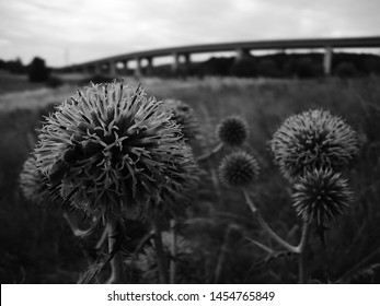 Thistles in sommer near czech city of Chomutov and highway D7 on 16th July 2019
