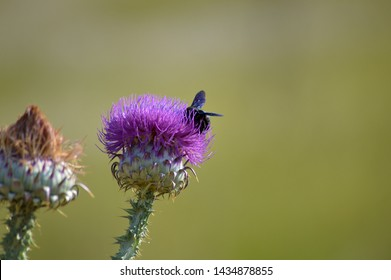 thistles in summer in the field