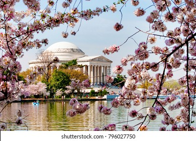 Thomas Jefferson Memorial in the Spring with Cherry Blossoms Across the Potomac