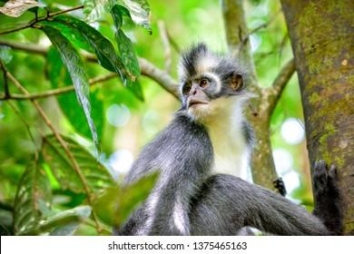 Tropisch Regenwoud Images Stock Photos Vectors Shutterstock