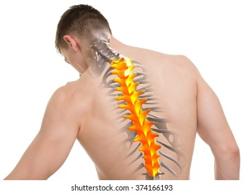 Thoracic Spine Images, Stock Photos & Vectors   Shutterstock
