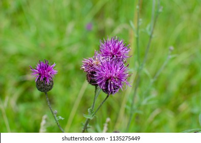 thorn flowers on grass background