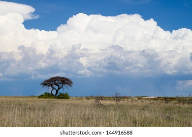 Thorn tree and white thunder clouds A landscape with a thorn tree in the foreground and approaching rain storm - big white clouds