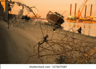 Thorns plant is the focus before the old ship in the beach.