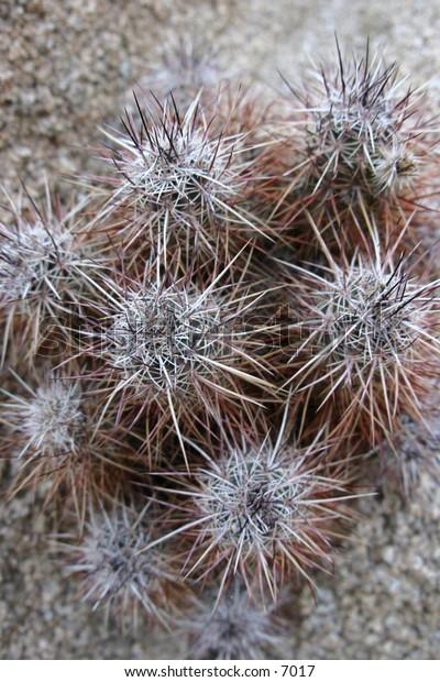 thorny cactus reaching towards the sky