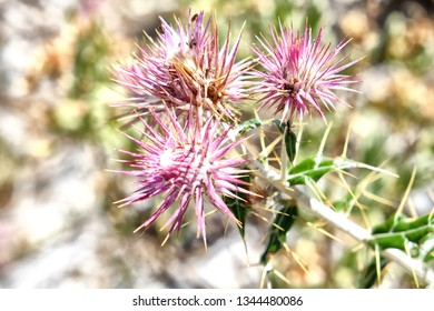 A thorny plant with insects on in Cruz de Juanar in Spain