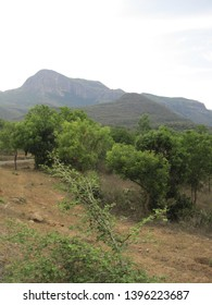 The thorny scrub forests of the Chinnar Wildlife Sanctuary