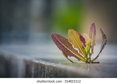 Thorny weed growing through pavement crack on the sidewalk. Nature adaptation in an urban environment. Life triumph. Shallow depth of field.