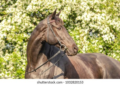 thoroughbred horse flowers