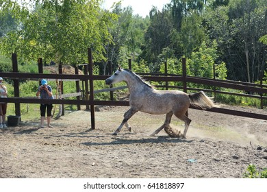 thoroughbred horse on the background