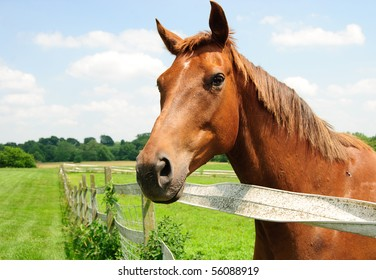 A thoroughbred horse on farm side view