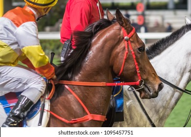 Thoroughbred horse ridden by jockey. Close up horizontal image with part of human body.