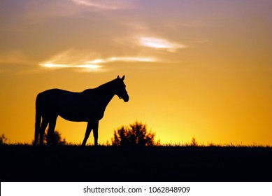 A thoroughbred horse is silhouetted against a low sun