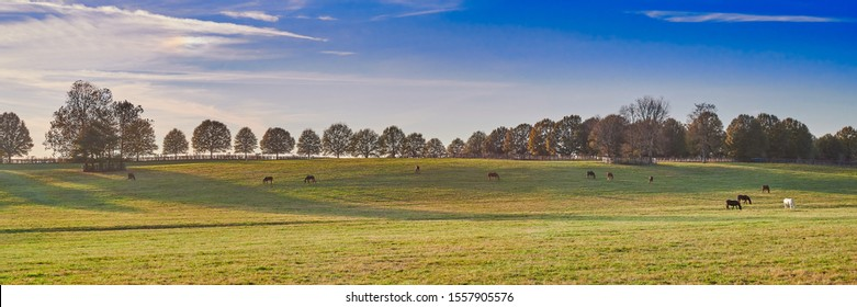 Thoroughbred horses grazing on a hill in Central Kentucky.