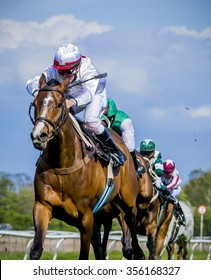 Thoroughbreds racing for the finish.