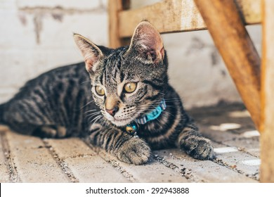 Thoughtful grey tabby cat wearing a blue collar and bell lying thinking on a paved floor looking away to the side