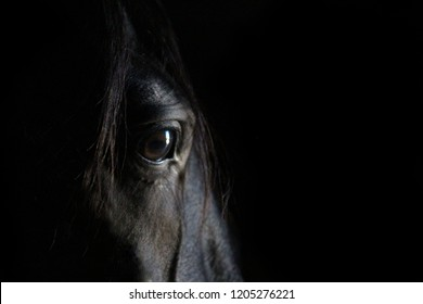 Thoughtful horse eye portrait.