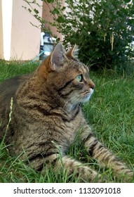 Thoughtfull  cat  in the garden