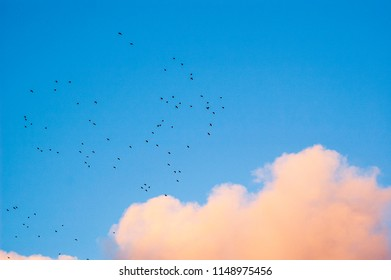 Thousand birds flying on the blue sky