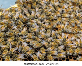 Thousands of bees on a frame from a behive. The bees are crawling all over the frame - selective focus