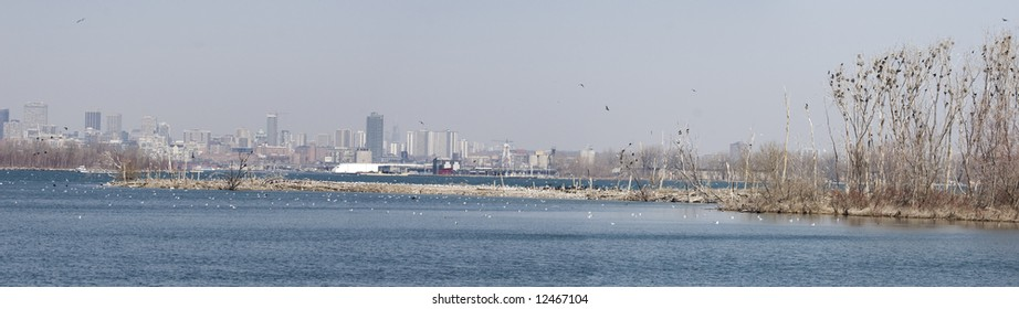Thousands of birds, mainly waterfowl, gather on small islands in Lake Ontario off the shore of Toronto at the beginning of spring