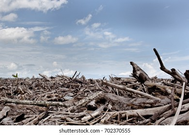 Thousands of pieces of driftwood collected along the banks of the Bongo River in Costa Rica