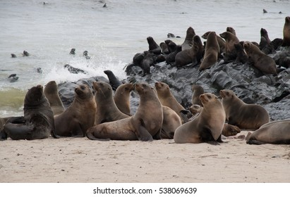 Thousands of wild seals at Cape Cross Seal Reserve, Namibia