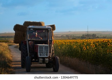 Thrace Region/Turkey - August 2014 Tractor with stack of hays passing through sunflower field
