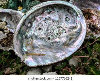 three abalone shells