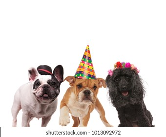 three adorable dogs wearing caps and headband on white background