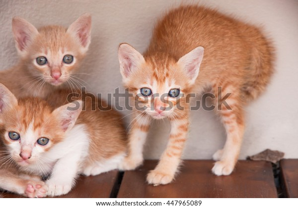 Three adorable kittens on wood floor and white background.