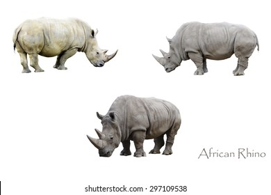 Three African rhinos isolated on a white background