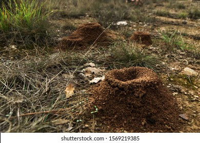 Three ant nest general wiew