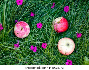 Three apples in green grass after rain with some flowers.