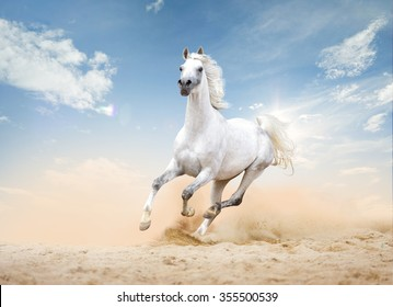 three arabian horses runs free in desert